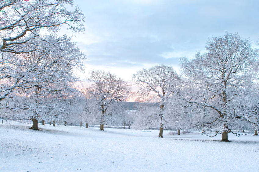 a snow-covered landscape with trees