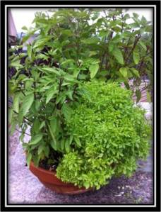 Basil Herb Bowl