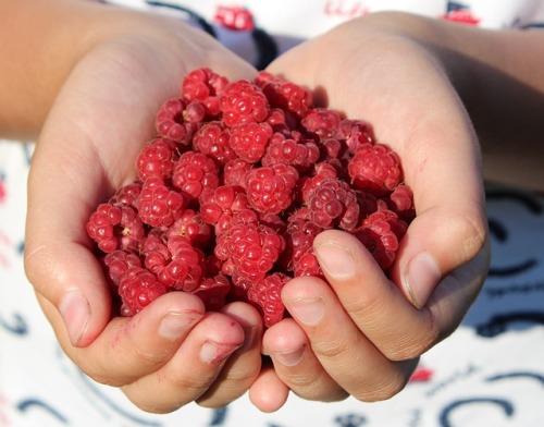 raspberry-995344_640