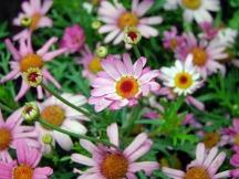 flowers-113503_960_720