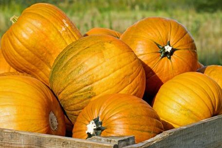pumpkin-2715052_1920