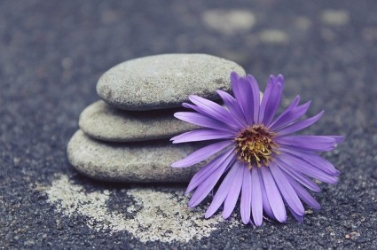 Picture of Calm - rocks and flower
