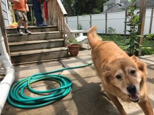 garden hose on walk, dog running, child on stairs