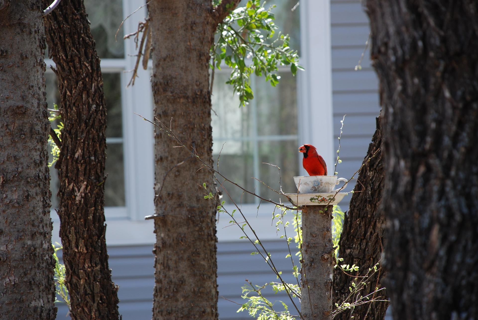 cardinal-2524695_1920