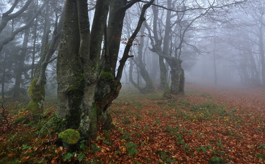 dark foggy autumn woods
