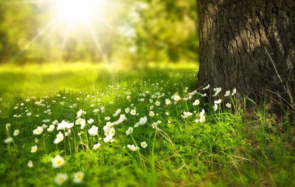 sun shining on a bed of wildflowers